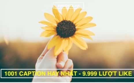 1001 Caption Hay